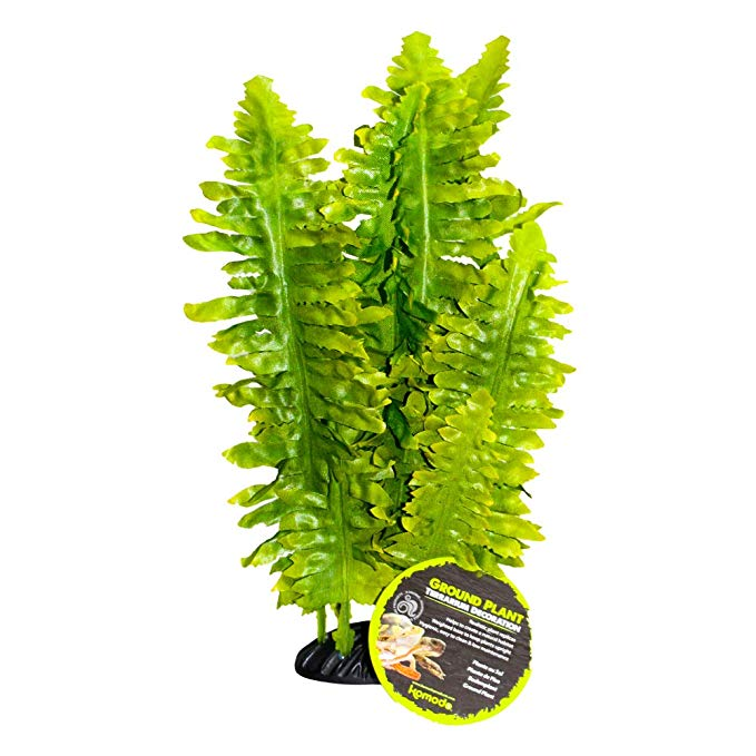 komodo-boston-fern-large.jpg